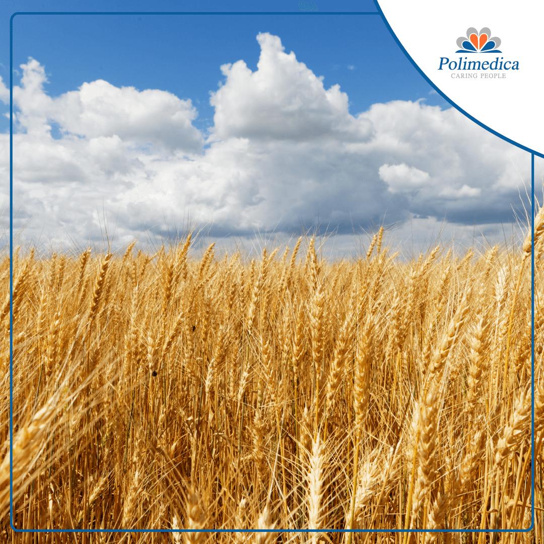 Immagine, con logo di Polimedica Melfi, di un campo di grano con del cielo nuvoloso. Foto di accompagnamento all'articolo dedicato alla Celiachia: sintomi, diagnosi, terapia.
